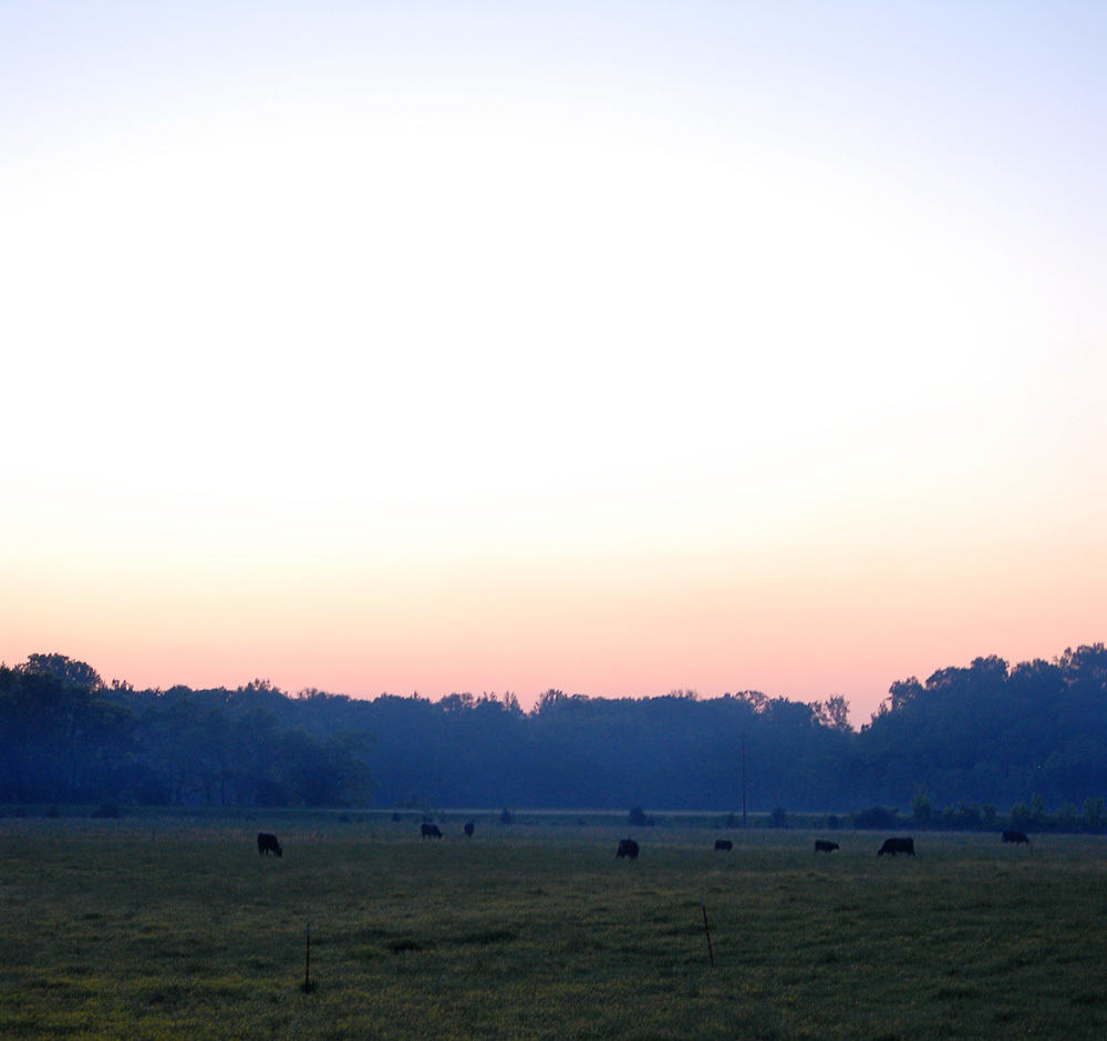 Cows, Evil Groundhogs, And Stinky Armadillos